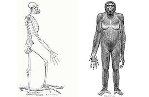a_human_fossil_2_1012