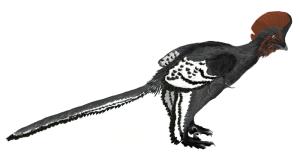 Anchiornis huxleyi, by Matt Martyniuk