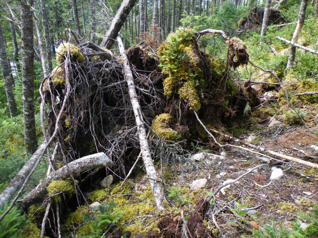 When a tree falls on a bed of sphagnum, it's possible that it really doesn't make a sound.