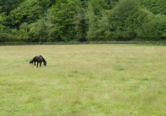 The Hooded Crow was in this guy's field.