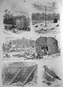 """The sportsmen's tournament at Coney Island. Methods of trapping and transporting the pigeons for use in the contests. From sketches by a staff artist."" From Frank Leslie's Illustrated News (vol. LII, no. 1344, pp. 299–300) - http://boc-online.org/passenger-pigeons-large-scale-live-capture/."